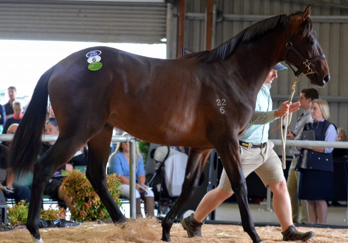 Tasmanian yearling sale soars to record levels