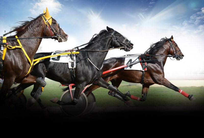 Trotters set to compete in Hobart on Sunday