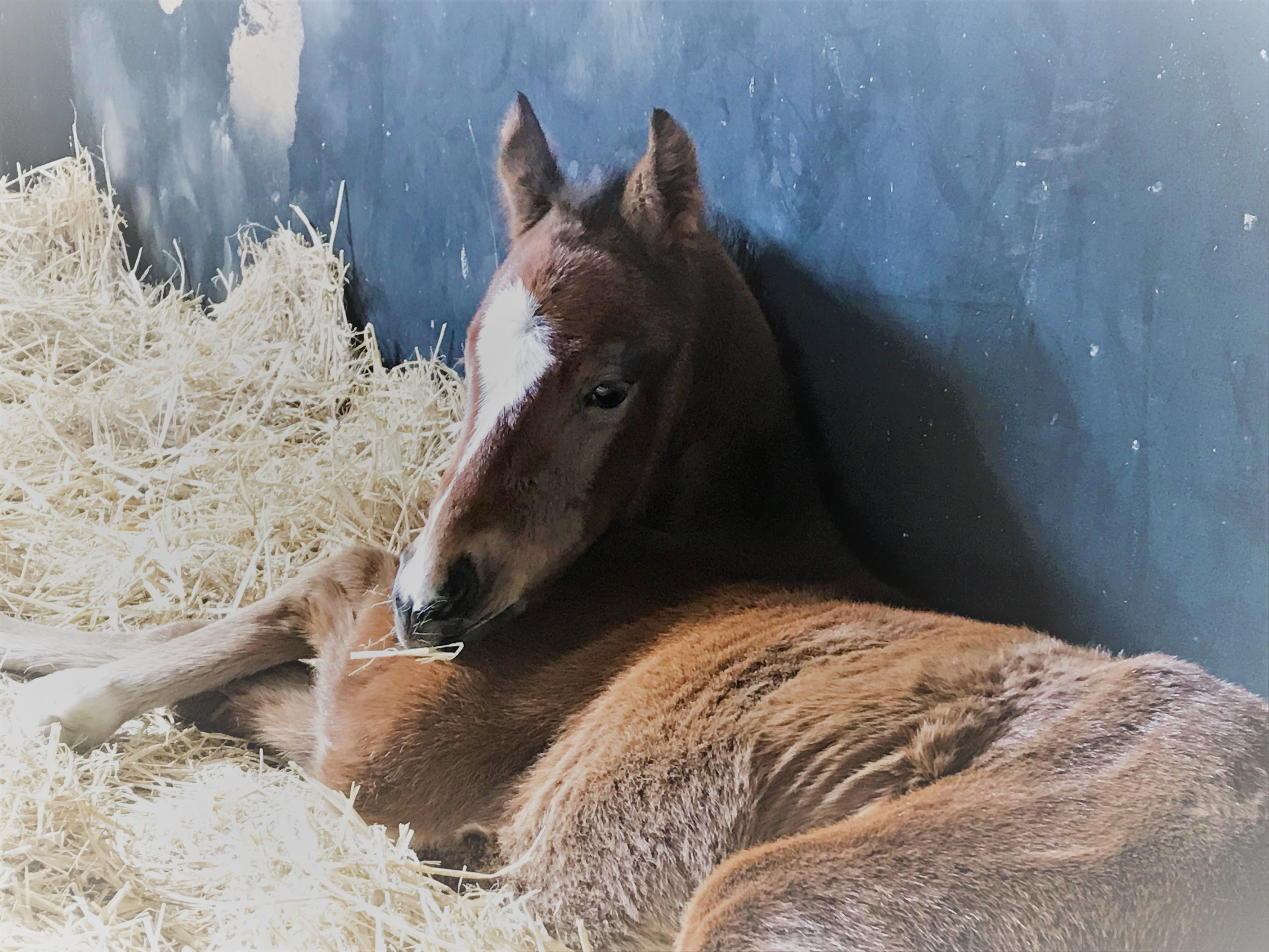 Eagle's first foal has landed