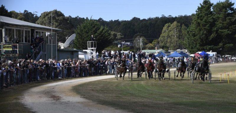 Tourello Standardbreds a new player in Tasmanian harness racing breeding
