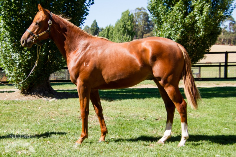 Quick payoff for Tough Boy thanks to TasBred