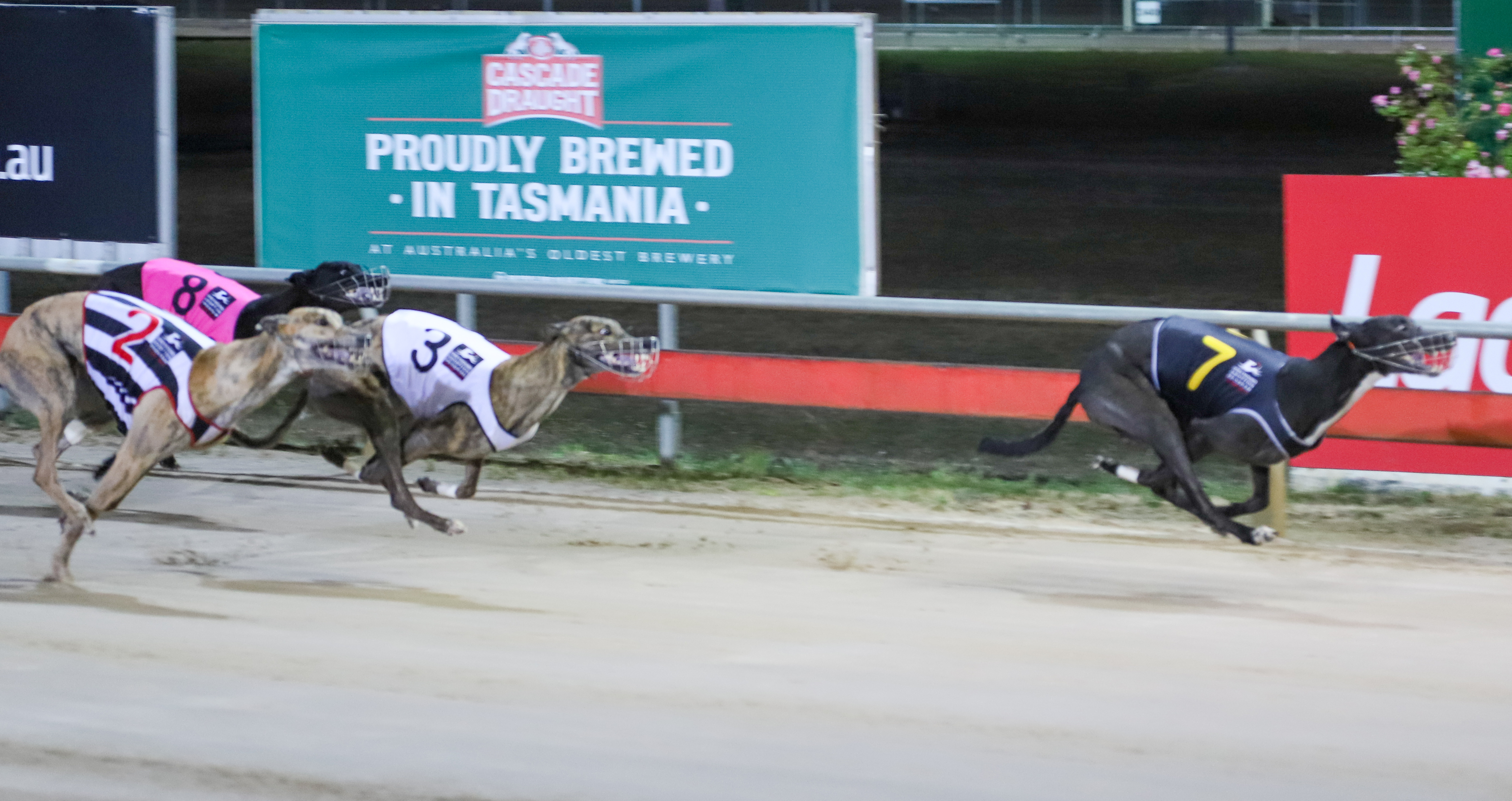 Stop Line leads the Tasmanian charge into the Ladbrokes Gr1 Hobart Thousand Final